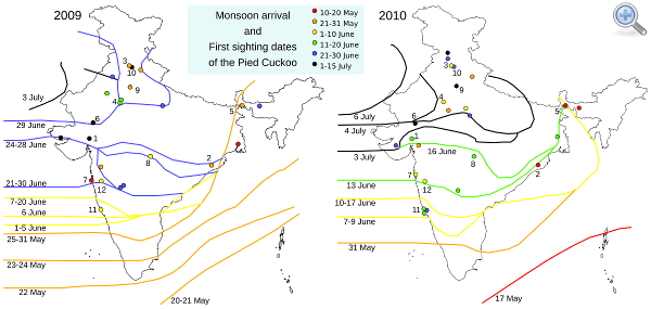 Pied Cuckoo map 2009, 2010